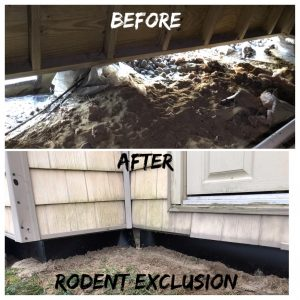 Rodent Exclusion before and after rats